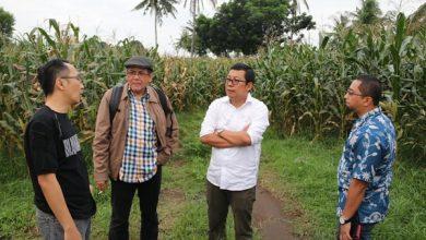 Photo of Ajak Perwakilan Peternak Ayam, PT Food Station Jajaki Pengadaan Jagung di Lombok