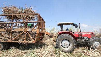 Photo of Musim Giling, RNI Optimalkan Tebu Petani Rakyat untuk Pasokan Gula di Semester II 2021