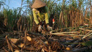 Photo of PT RNI Ajak Milenial Jadi Petani Tebu Bantu Transformasi Industri Gula