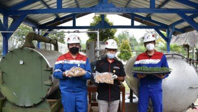 Photo of PLTP Kamojang Dongkrak Produksi Bibit Kentang Naik 2 Kali Lipat