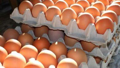 Photo of Demi Kesejahteraan Peternak Rakyat, Pataka Minta Pemerintah Kaji Kebijakan Stabilisasi Harga Ayam-Telur
